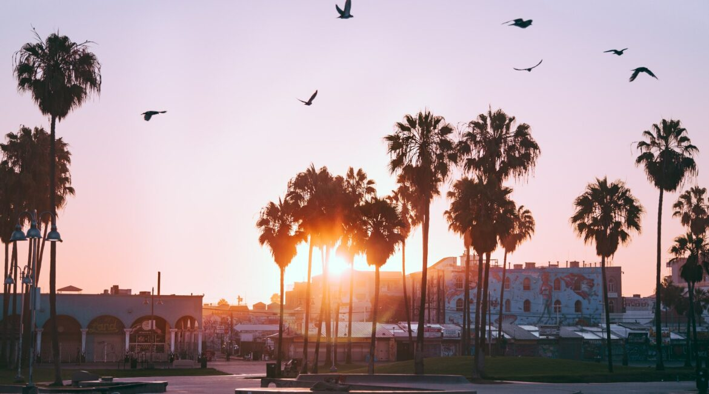 Palmtree sunset