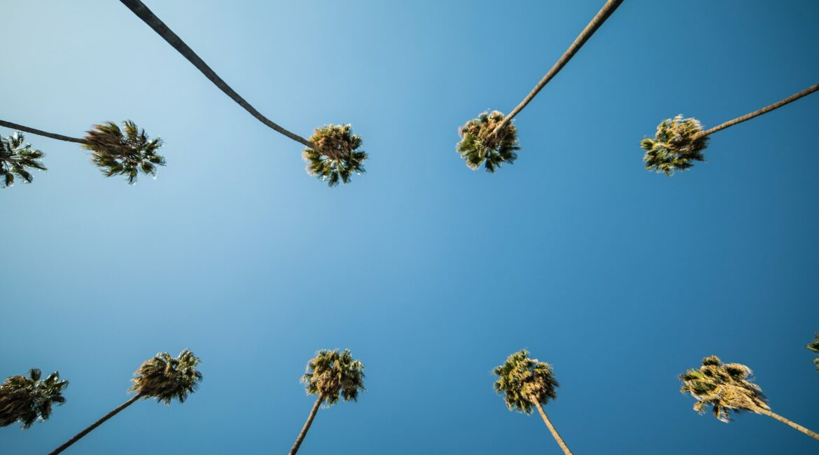 Underhead view of palmtrees and blue sky.