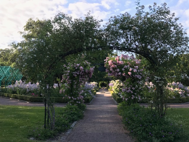 rose gardens in Malmö Sweden for the budget traveller